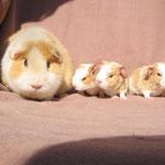 Das war einmal : drei kleine Negerlein ! Teddy mit Tascha,Pablo,Pebbels in 2008