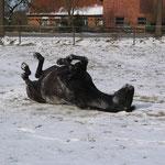 Der plötzliche Wintereinbruch wird genossen .....