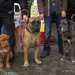 Yuma, Bullmastiff Igor, Pepper