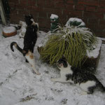 Schneeflocken muß man doch fangen können ......!
