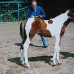 Fohlenschau ZFDP, Juli 2001