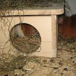 ....+ Barney testen das neue Haus ....