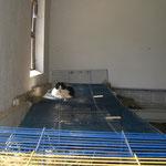 Über den Dächern von Nizza - nein, Schweinehausen *g* ! Lissy