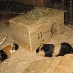 Huch, ein neues Haus ! Zorro + Krümel