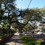 """alte Bäume säumen die Strassen im """"Garden District"""""""