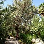 Garten innerhalb der Stadt Tabas
