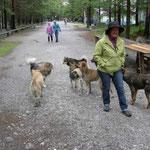 freilaufende Hundemeute - Barbara findet es ungemütlich