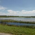 Sumpfgebîet entlang der Strasse