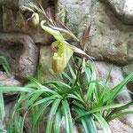 Orchideen die wir auch kennen