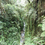 eine andere: Regenwald
