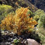 und draussen die Bäume in prächtigen Herbstfarben