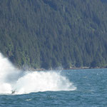 und er klatscht direkt neben uns ins Wasser