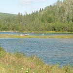 Alaska - Wälder, Flüsse, Seen