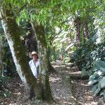 schön angelegter Pfad durch denDschungel