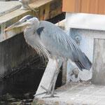 und Wasservögel vor den Hausbooten