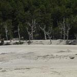 die Auswirkungen des Vulkanausbruchs von 2011