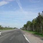 endlose gerade Strassen durch Birkenwälder