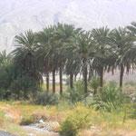 immer wieder kleine Oasen in der Wüste