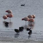 Flamingos auf 4600 Mü