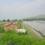 chinesische Treibhäuser, halb Plastik – halb Erde