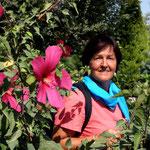 Hibiskus – wie bei uns, nur viel grössere Blueten