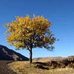 kann Herbst noch schöner sein ?