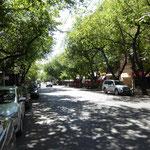 Oasenstadt Mendoza - links und rechts der Strasse grüne Bäume