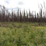 und dann abgebrannte Wälder - schade
