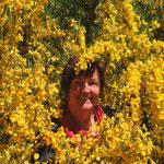 Barbara diesmal nicht in den Lupinen sondern im Ginsterbusch