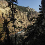 Der Grand Canyon des Yellowstone NP
