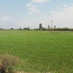 und fruchtare Deltas mit Reisfeldern