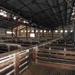 In dieser Halle werden die Schafe geschoren (aber nicht in dieser Jahreszeit)