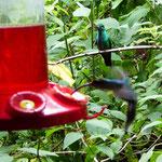 und Kolibri