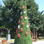 so sehen hier die Weihnachtsbäume aus