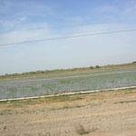 und dann bewässerte Felder in der Wüste