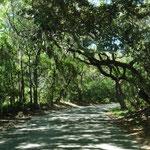 wunderschön durch diese Wälder zu fahren