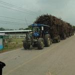 Transport von Zuckerrohr