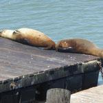 Fishermanswharf - die beiden halten die Stellung