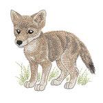Kojote 01