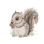 Eichhörnchen 01