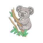 Koalabär 01