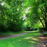 Forêt d'Argonne à Rarécourt