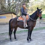 Frühjahr 2013: was für ein schickes, muskelbepacktes Pferd Little Joe doch geworden ist!