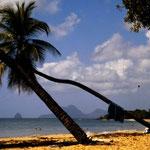 Segeln ab Martinique - Bucht vor Sainte-Anne im Süden von Martinique