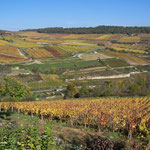 Wijngaarden Saint Romain
