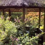 東屋と萩の花