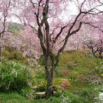 桜の種類も多様・豊富です