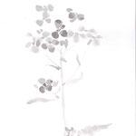 大根花 japanese ink,paper  25.7×18.2cm