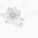 ふきのとう japanese ink,paper