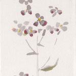 大根花 japanese ink,watercolor,paper  14.8×10cm